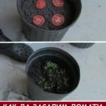 Най-лесният начин да засадим полезни плодове и зеленчуци у дома